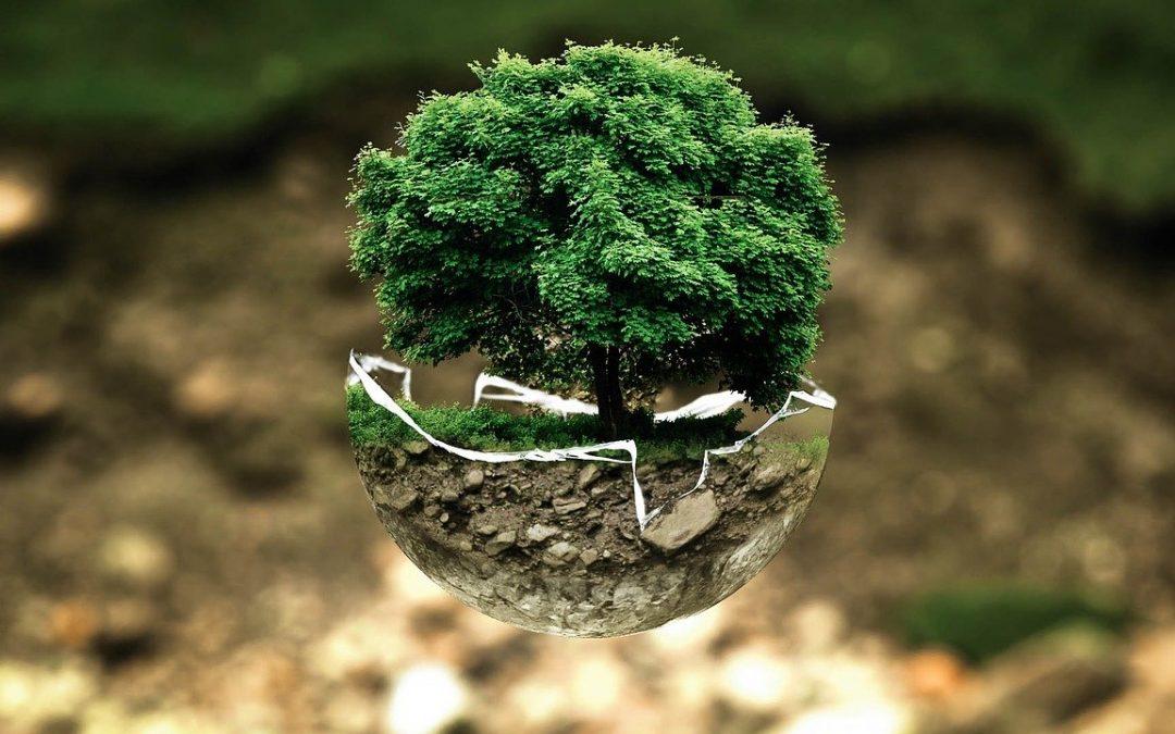 Une boutique Zéro Déchet : une écologie responsable !