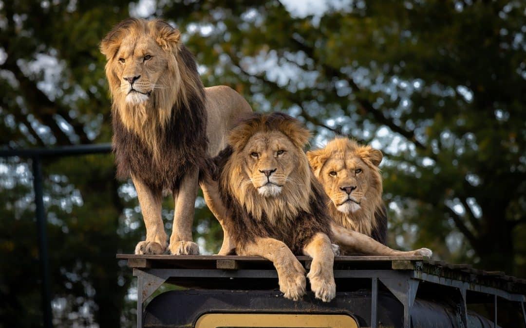 Une sortie au parc animalier en famille ?